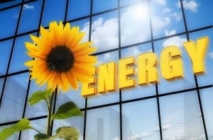 energy_sunflower