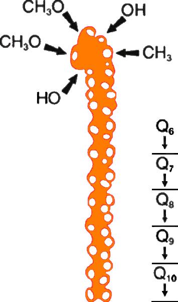Q10_molecule